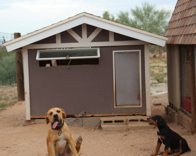 Custom Dog Houses Luxury Dog Houses For Sale Arizona