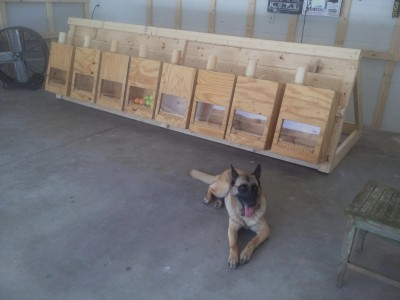 Box Jumps For Sale >> dutch box, custom crates, kennels, dog house, whelping house